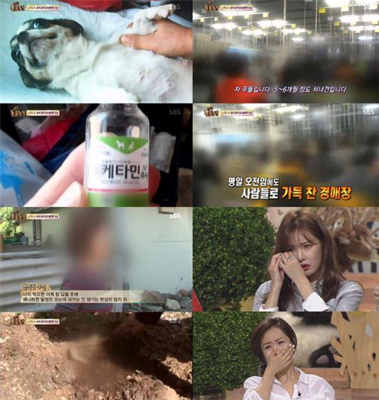 사진= SBS 'TV 동물농장' 방송화면 캡처