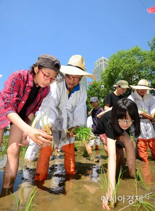 [포토]도시 아이들에겐 신기한 전통 모내기