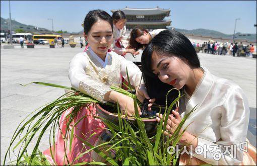 [포토]'광화문에서 강릉단오제를 만나다'