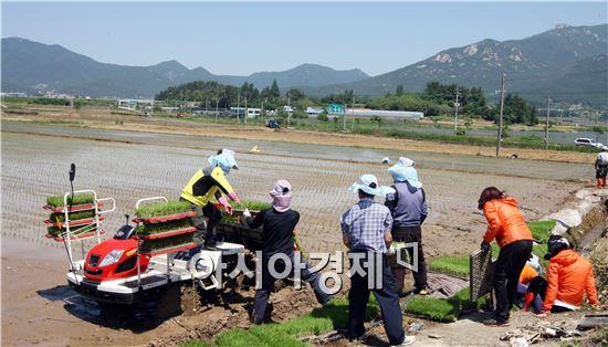 장흥군(군수 김성) 쌀 적정생산 및 적기 영농 추진을 위한 홍보와 기술지원에 들어간다.