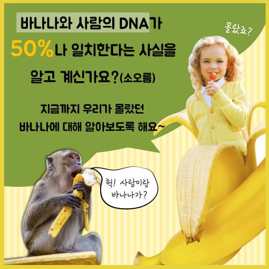 [카드뉴스]인간과 DNA 50% 같다, '바나나'의 기적