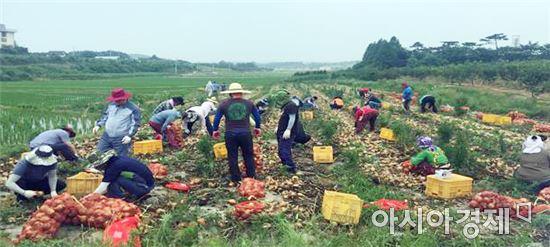 영암군 신북면 농번기 인력난 농가 어려움 해소