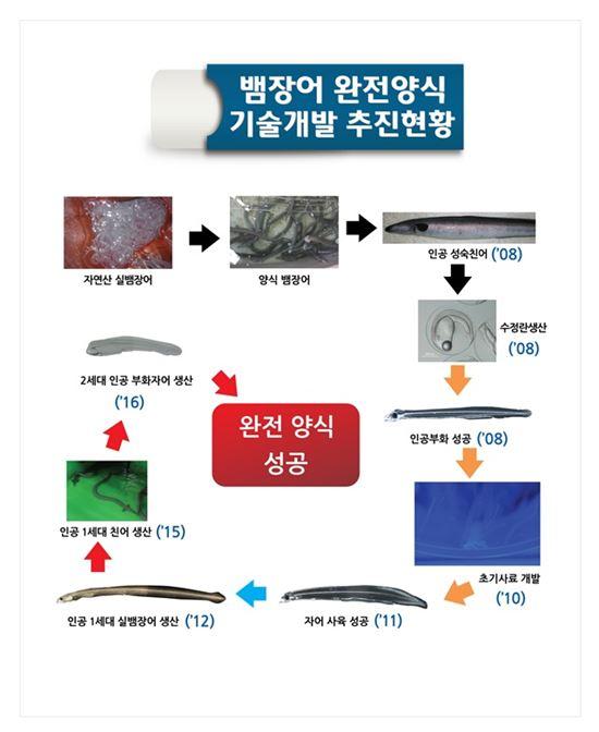 뱀장어 완전양식 기술개발 추진현황(자료:해양수산부)