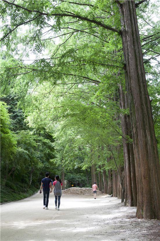 맑은 계곡을 따라 이어진 황토와 모래가 깔린 산책로는 트레킹 명소로 떠올랐다.