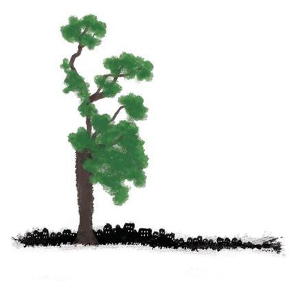 서초동 향나무를 지나며