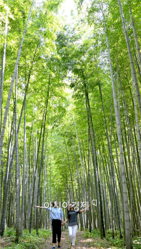 """[포토]시원한 '대나무 숲'에서 """"여름휴가 보내세요"""""""