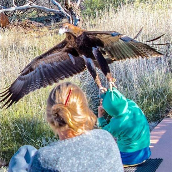 독수리가 아이의 옷을 두 발로 꽉 쥐고 있다.(인스타그램 캡처)