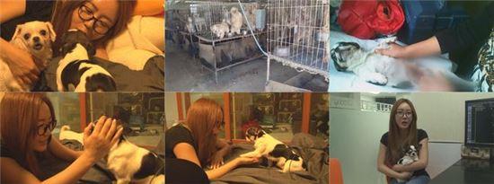 이의정 와와. 사진=SBS '동물농장' 방송 캡쳐