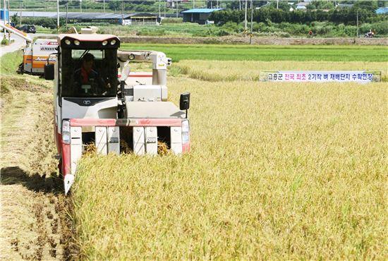 전남 고흥군이 27일 동강면 죽암농장(대표 김종욱)에서 전국 최초로 벼 재배기술에 정보통신기술(ICT)를 접목한 '벼 2기작 노지 재배단지'에 첫 수확 행사를 가졌다.