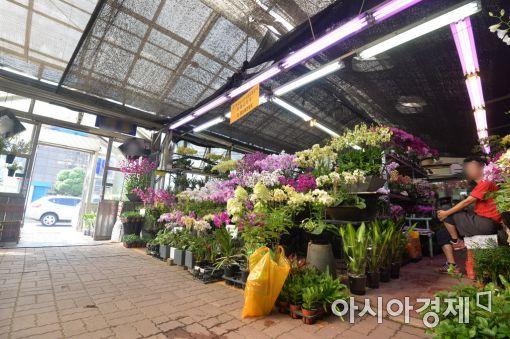 [포토]손님 기다리는 꽃