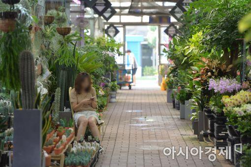 [포토]손님 기다리는 꽃시장