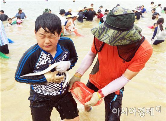 함평군 돌머리해수욕장 뱀장어잡기 체험행사 인기