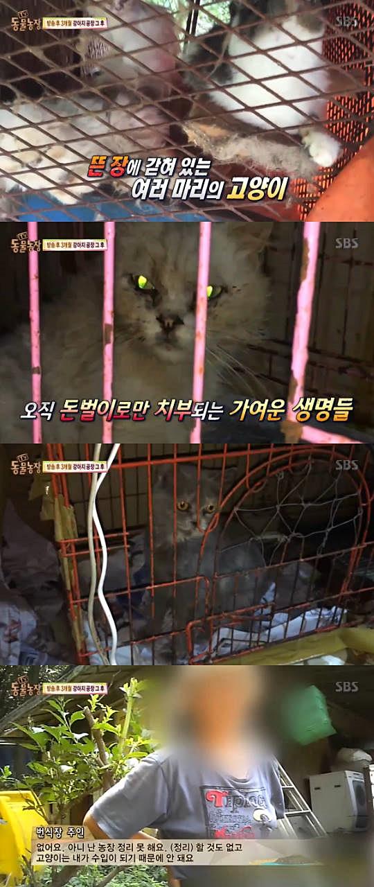 고양이 공장. 사진=SBS 'TV 동물농장' 방송 캡쳐