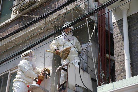 용산소방서 주택가 벌 안전조치(제공=서울시)