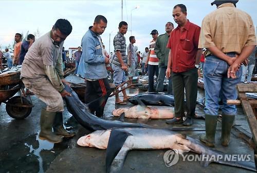 지난해 12월 인도네시아의 한 어시장에서 샥스핀을 위해 포획된 상어가 판매되는 모습이다. (사진=연합뉴스)