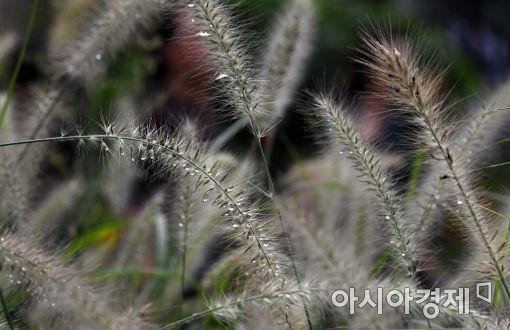 [포토]비와 함께 온 가을