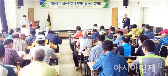 전남농협, 겨울배추 생산안정제 진도관내 사업설명회 개최