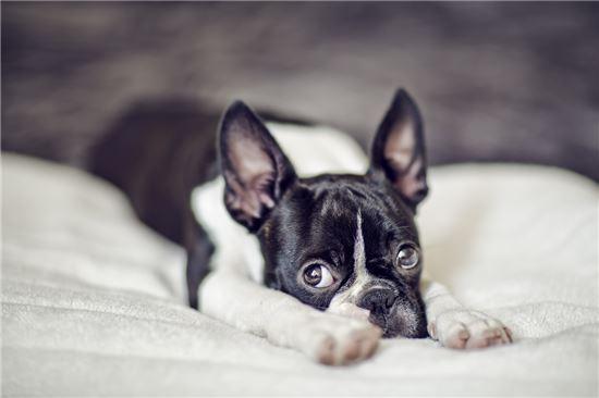 [마리 톡톡]당신의 애완견을 짜증나게 하는 행동 7가지