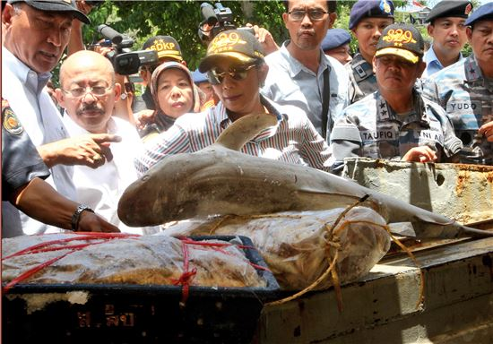 수시 푸지아투티 인도네시아 해양수산부 장관(가운데)이 지난달 25일(현지시간) 수마트라 섬 북단 아체주(州)의 사방항(港)에서 불법 조업 중이던 태국 어선으로부터 압수한 수산물을 살펴보고 있다(사진=AP연합뉴스).