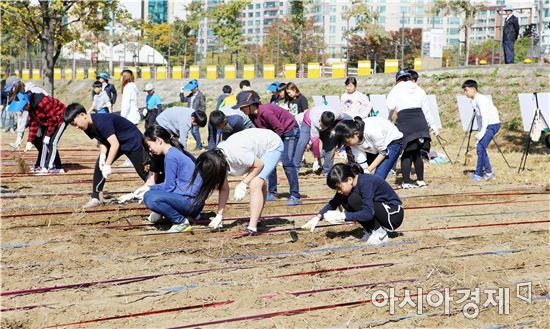 고창군, 서울 한강공원에 청보리 파종