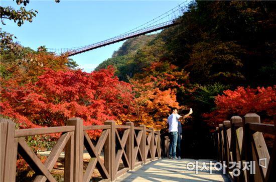 순창 강천산,붉은 단풍 유혹 시작