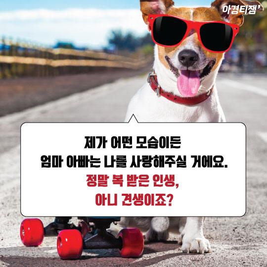 [카드뉴스]난 상속받는 '금수저 견'이예요 - 해피의 고백