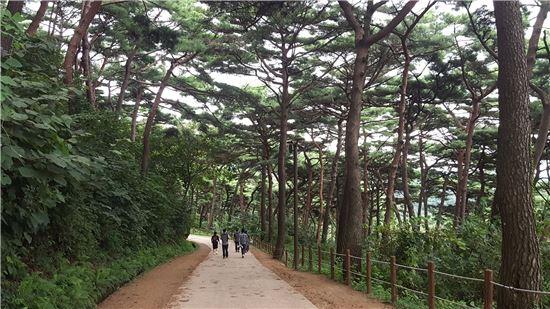 올해 가장 아름다운 숲으로 선정된 남한산성 소나무숲. 사진제공=유한킴벌리