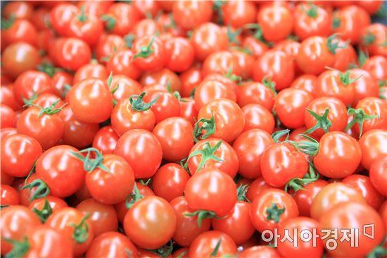 완도자연그대로 농법으로 키우고 있는 방울토마토
