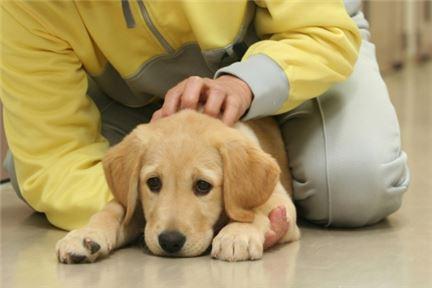 재소자는 개를 보살피고  개는 재소자의 삶을 바꿨다