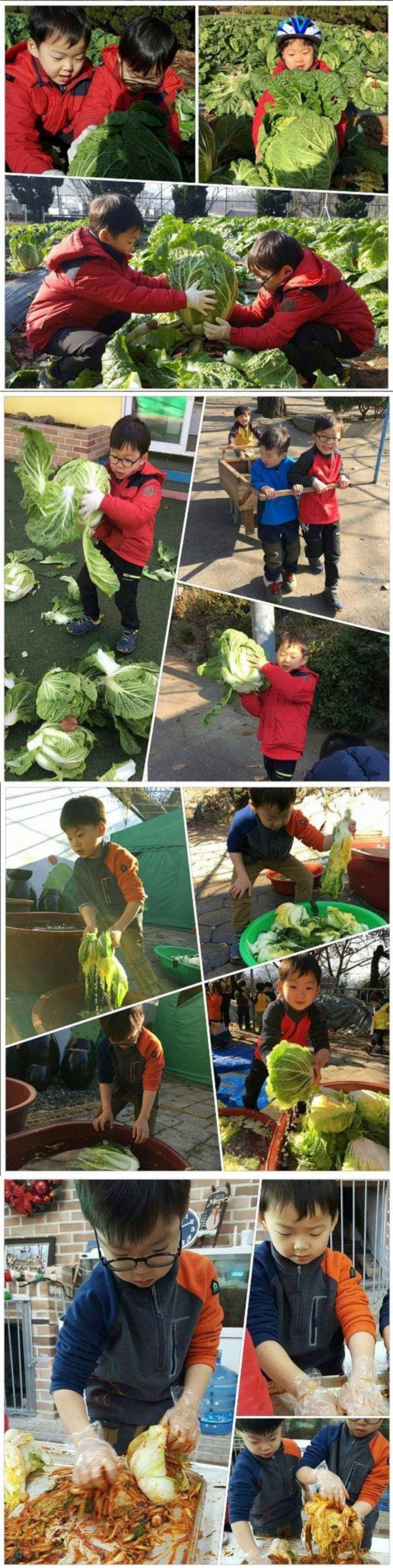 ▲삼둥이가 다니는 유치원에서 김장체험을 하고 있다. (사진=송일국 인스타그램)