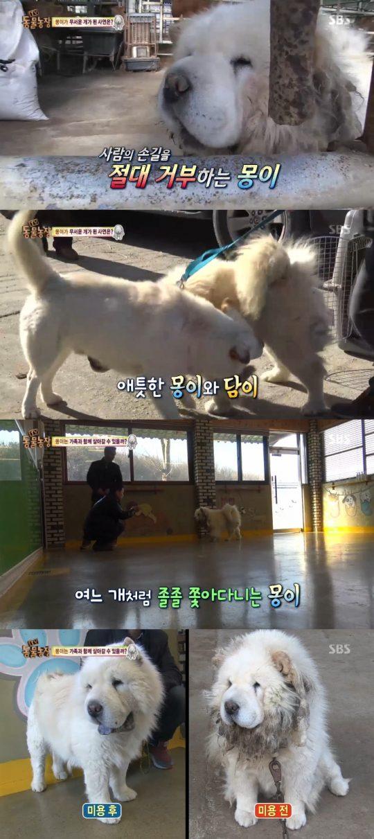 몽이 담이. 사진=SBS '동물농장' 방송 캡쳐