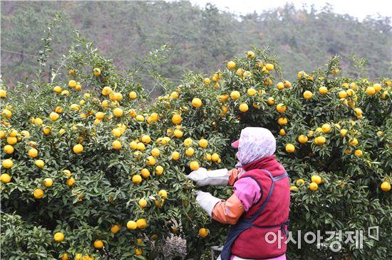 완도군은 해풍의 농업적 이용 가치 구명으로 명품 농산물을 생산한다는 방침이다.