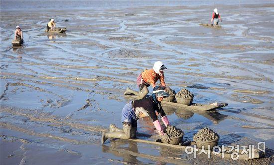 보성군 벌교꼬막 자원회복 위한 연안바다목장 신규사업 확정