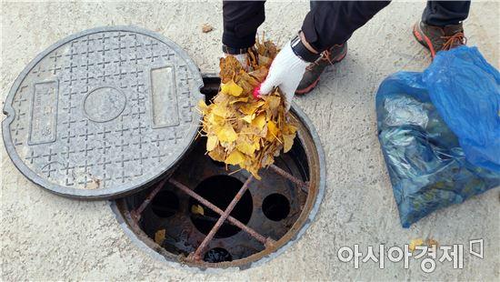 함평군 '은행잎 활용 모기유충 방제'시범 실시