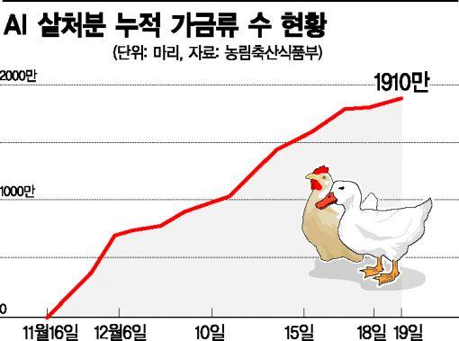 사상 최악 조류독감, 창신동 조류상가 '참새·비둘기' 두렵다