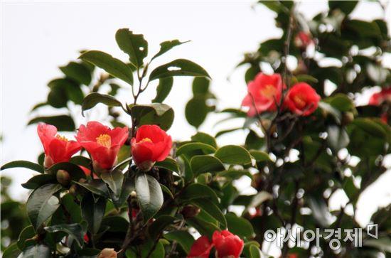 '숲 속의 전남', 12월 나무에 동백나무 선정