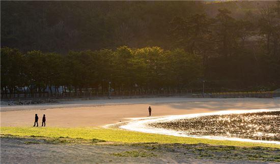 이른 아침 상주 은모래비치를 걷고 있는 여행객들