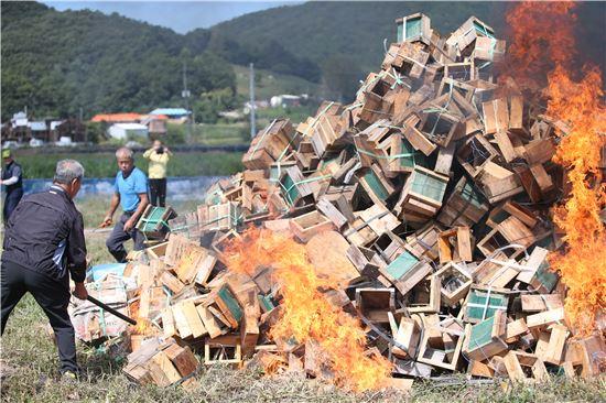 '낭충봉아부패병' 화형식에서 한 농민이 바이러스에 감염된 벌통에 불을 붙이고 있는 모습. 사진 = 연합뉴스