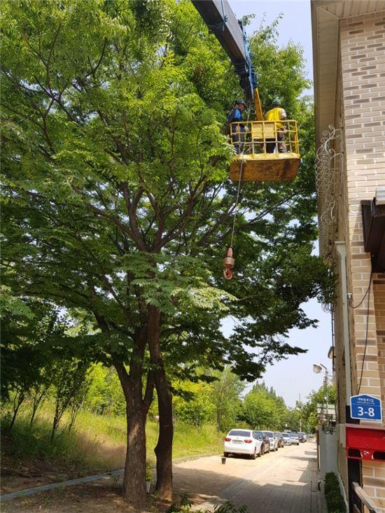나무 정비