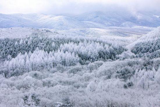대관령 설경을 주제로 2016 산림문화작품공모전에서 장려상을 수상한 작품(우제용 作). 산림청 제공