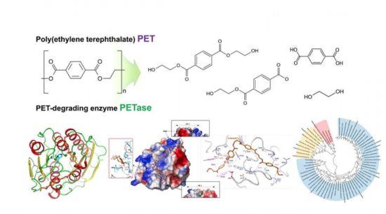 PET 분해 모식도 및 PET 분해 신규 효소(PETase) 단백질 결정 구조와 원리 규명 관련 전체 개념도(제공=과학기술정보통신부)