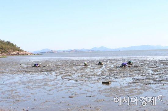 보성갯벌 '한국의 갯벌' 유네스코 세계유산 등재