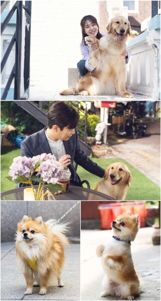 ▲ '식샤를 합시다3' 에 골든 리트리버 콩알이가 출연한다.   © 사진=tvN