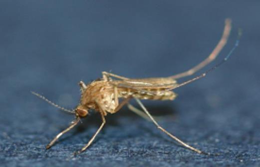 경북도, 올해 첫 일본뇌염 매개 모기 발견 … 작년보다 1개월 늦어