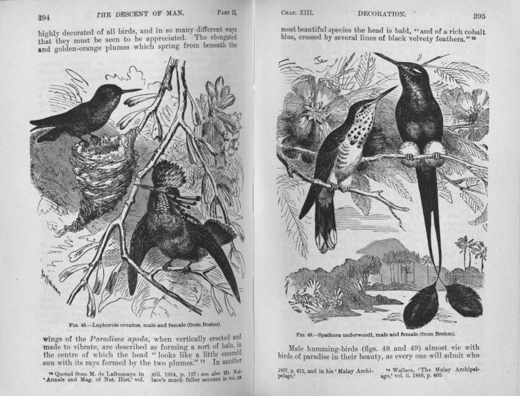 찰스 다윈의 '인류의 기원과 성 선택'.