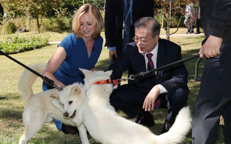 문재인 대통령이 12일 오전 청와대에서 영국 BBC와 인터뷰를 하던 도중 로라 비커 진행자에게 평양에서 열린 남북정상회담에서 김정은 북한 국무위원장에게 선물받은 풍산개 곰이와 송강이를 소개하고 있다.   사진=청와대