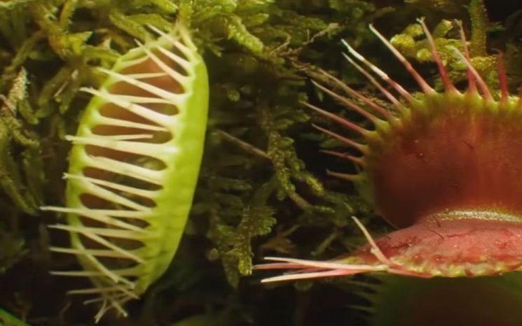 [과학을읽다]식물도 위험할 땐 소통한다?