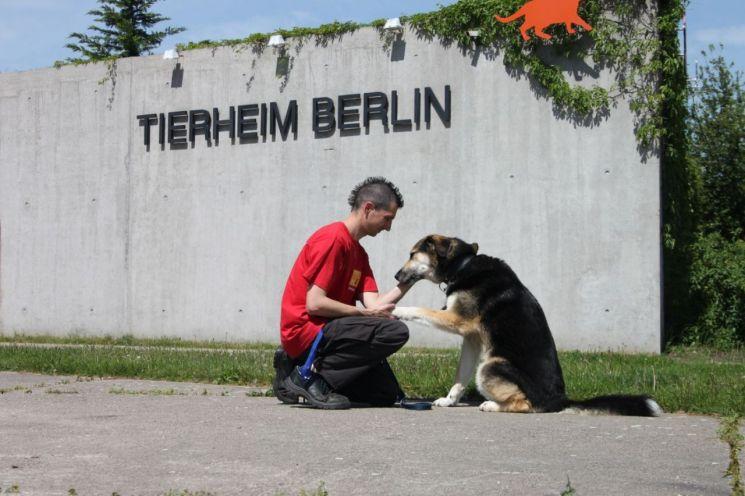 독일의 니더작센주의 경우 반려견을 키우기 위해선 2차에 걸친 필기-실기 시험을 통과해야 한다. 사진 = Tierschutzverein f?r Berlin