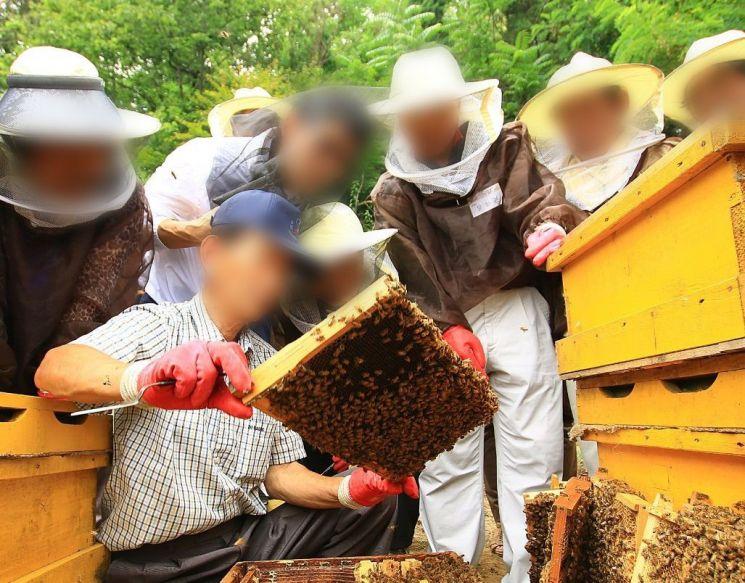 꿀벌 멸종을 막기 위한 대안으로 도시 양봉이 주목받고 있습니다. 도시 양봉 교육을 받고 있는 사람들의 모습. [사진=아시아경제DB]