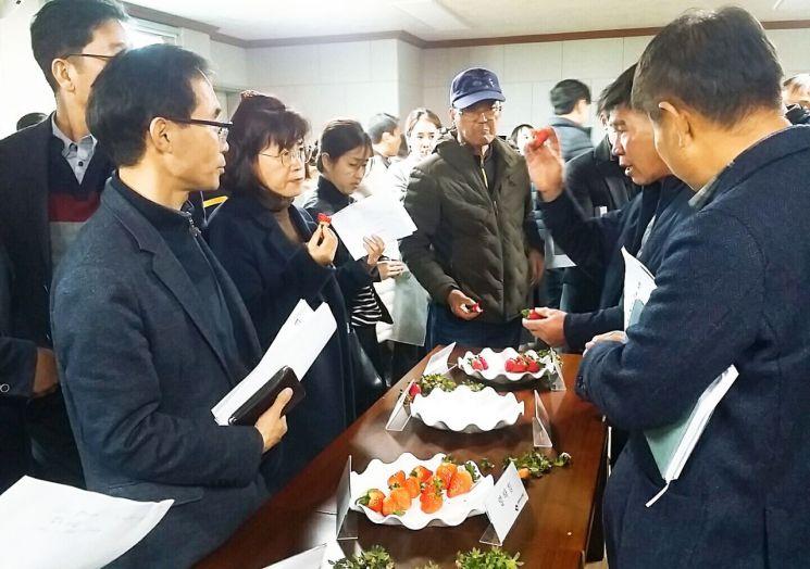 담양군은 최근 농촌진흥청과 공동으로 담양군에서 자체개발한 딸기 신품종 '메리퀸', '죽향' 품종 조기 확대 보급을 위한 품종 설명회를 개최했다. 사진=담양군